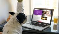 Dog watching computer