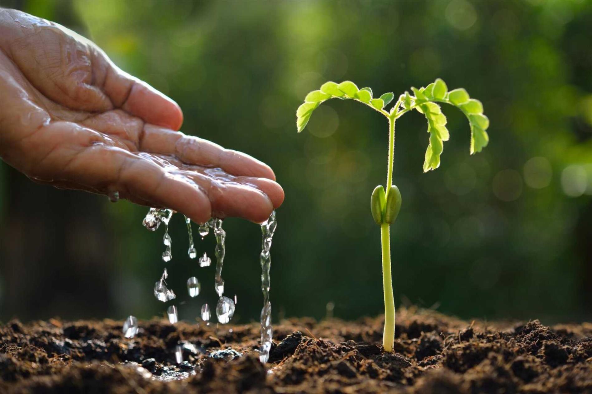 Fruit Attraction debatirá sobre la gestión del agua en hortofruticultura