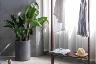 vestidor con plantas