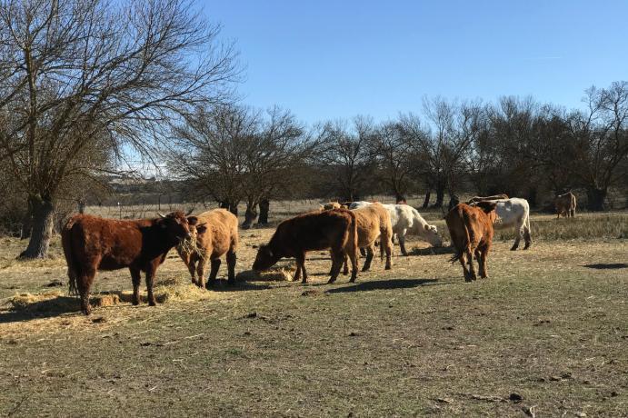 Bienestar animal en el sector cárnico