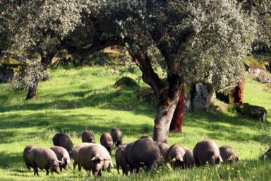 Compromiso Bienestar Animal, la certificación de bienestar animal